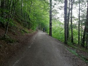 bosco-passeggiata-tana-ermellino-andalo